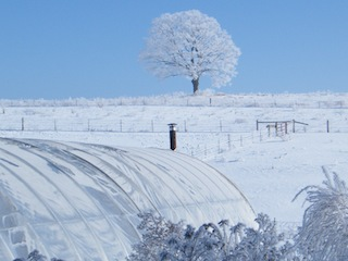 wintergreenhouse