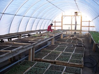 Greenhouse_work